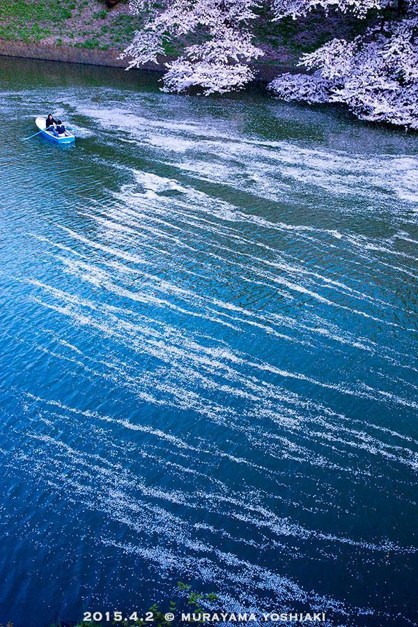 千鳥ヶ淵の花筏。これぞ自然美。華やかというより、切なさを感じる美しさだと思います。 pic.twitter.com/DcX3b7FZ6O