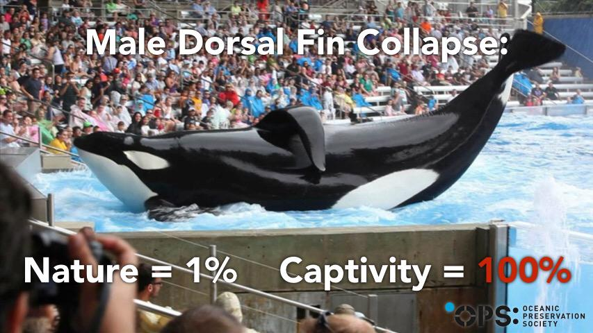 """@CoveMovie_OPS: Hey @SeaWorld... How do you explain this? #AskSeaWorld http://t.co/Oc1q2B6B8J"""