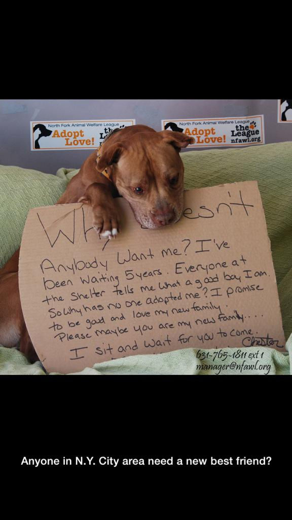 Just saw this on #reddit-- anyone in #NYC need a new best friend? #adoptdontshop #dogs #NewYork http://t.co/pbfYKGii7T