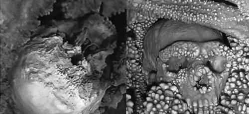 FOTO scheletro di Altamura (bianco/nero)