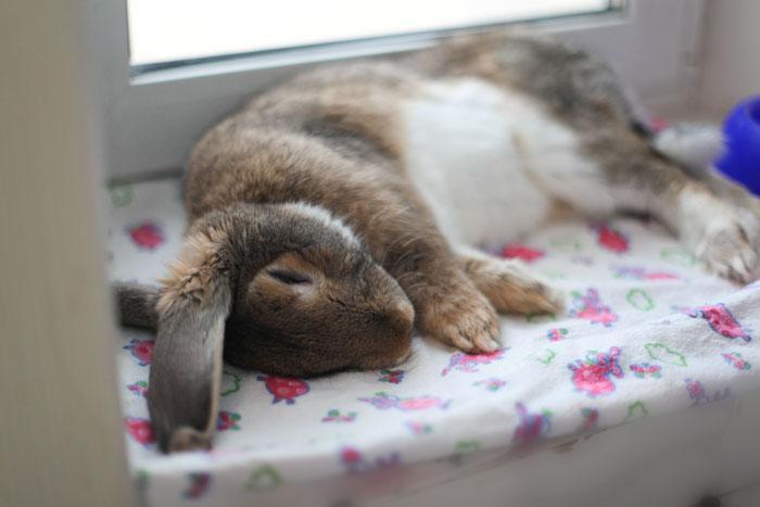 экзотические фотографии спящий заяц зайцы если
