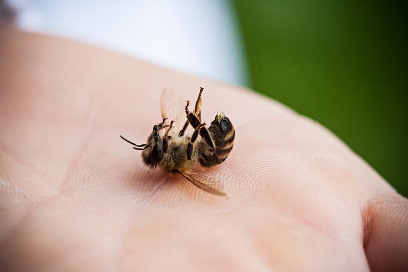 ビッグニュースが飛び込んできました!  米環境保護局(EPA)、ミツバチ大量死の要因とされる #ネオニコ 系農薬4種類の新規導入・使用拡大を「原則禁止」する方針と発表 ー朝日新聞デジタル http://t.co/u0Lv7v2pdD http://t.co/20NSFFVLd5