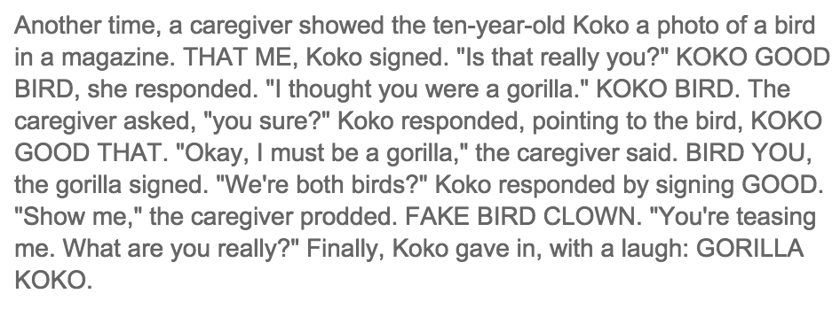 koko the gorilla has the same sense of humor as me http://t.co/YgTdZaXwG8