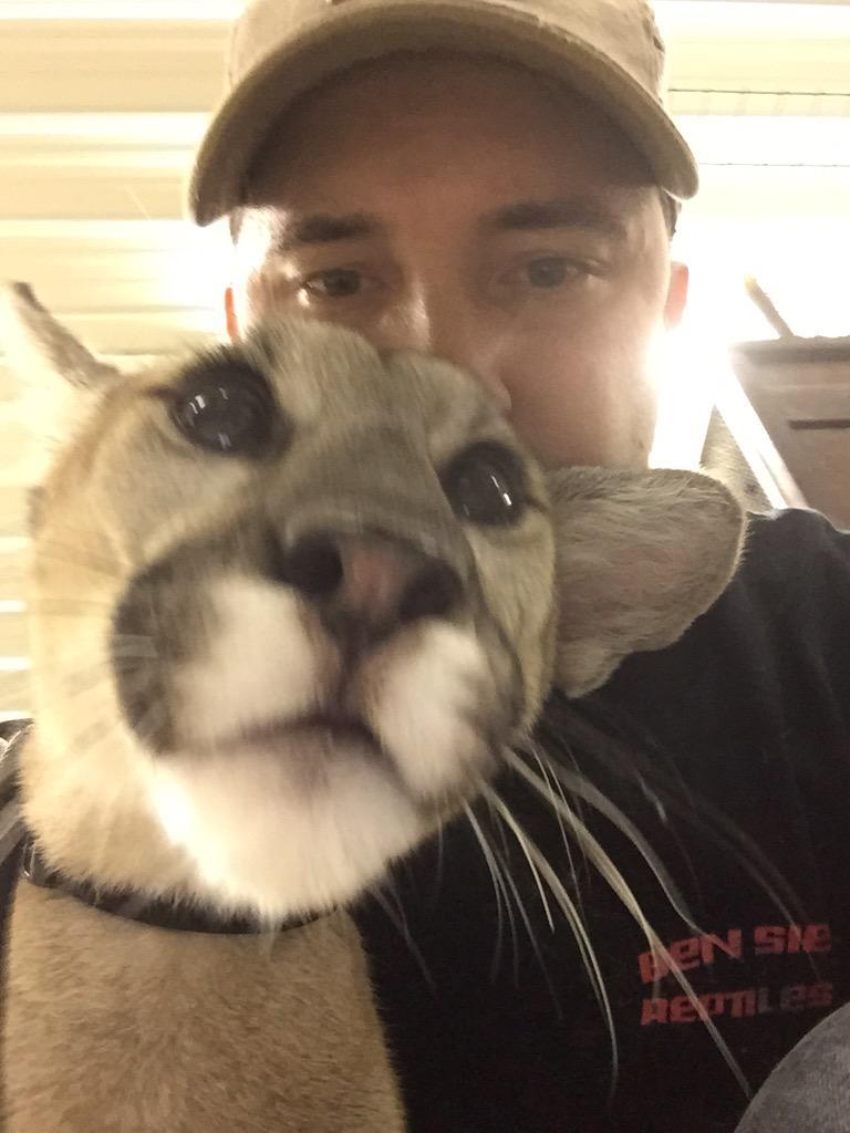 Selfie cougar