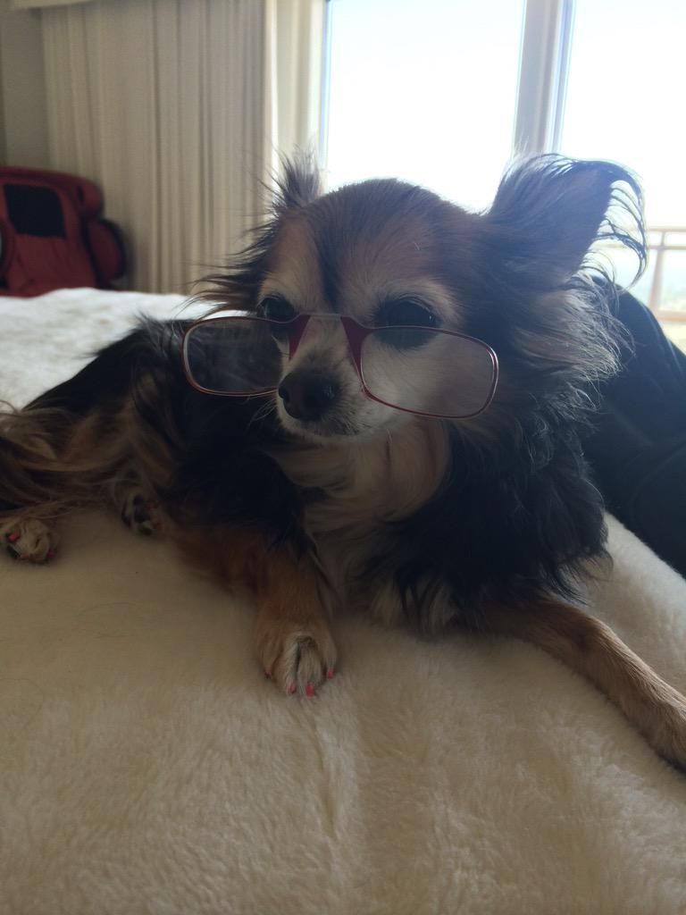 Look at Thumbie wearing mama's @ThinOptics :) Guess why she needed them?! ;) xoP #dogs http://t.co/B4DGDk3235