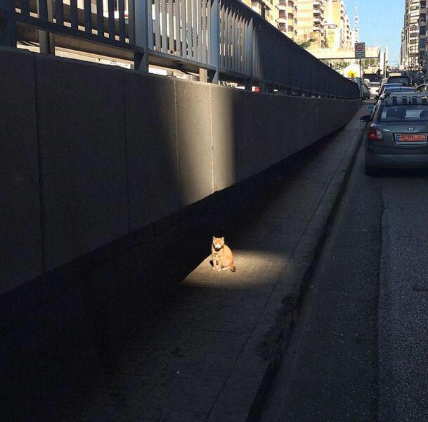 散歩の途中ですがここで猫さんから重大発表があります。 pic.twitter.com/QyttENSuxg