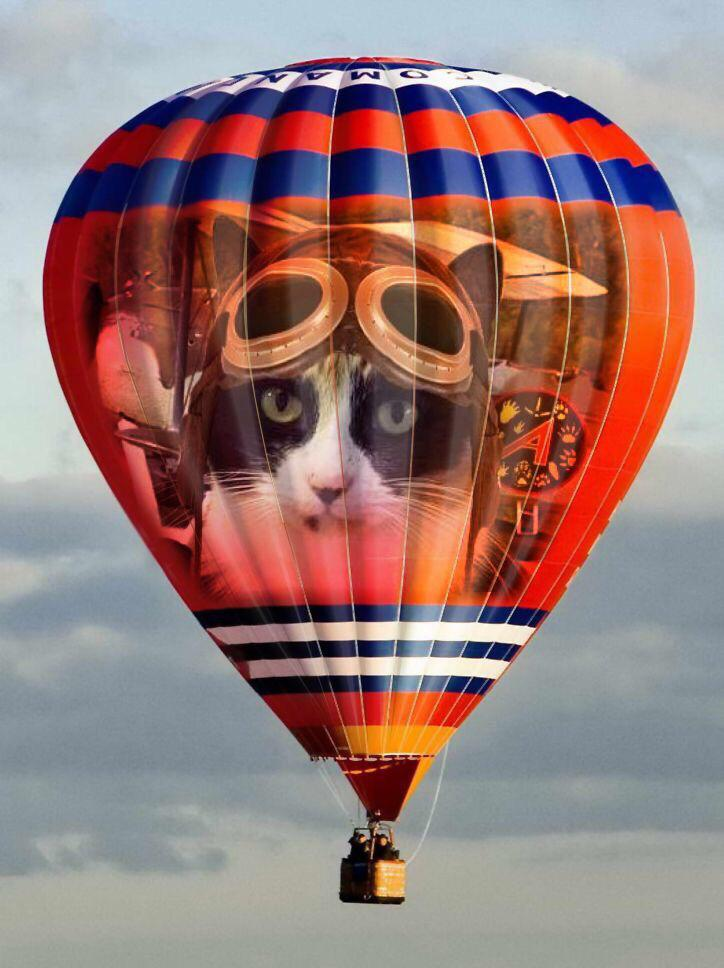 #TheAviators think I might fly in my balloon today as its so nice & sunny with plenty of wind. http://t.co/p4TvcWJqAX