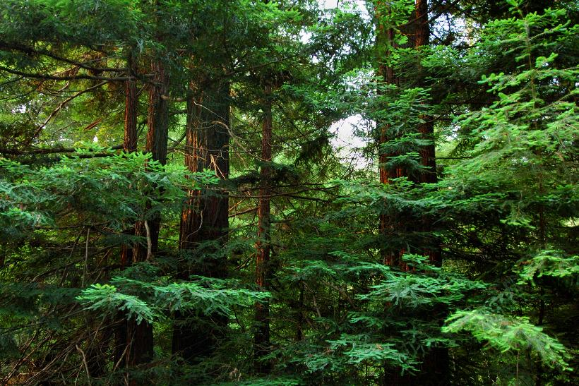 Green Apple: tech brand buys city-sized forest in conservation push http://t.co/OIIagnCWgY @MarketingUK http://t.co/85rWnJgPUv