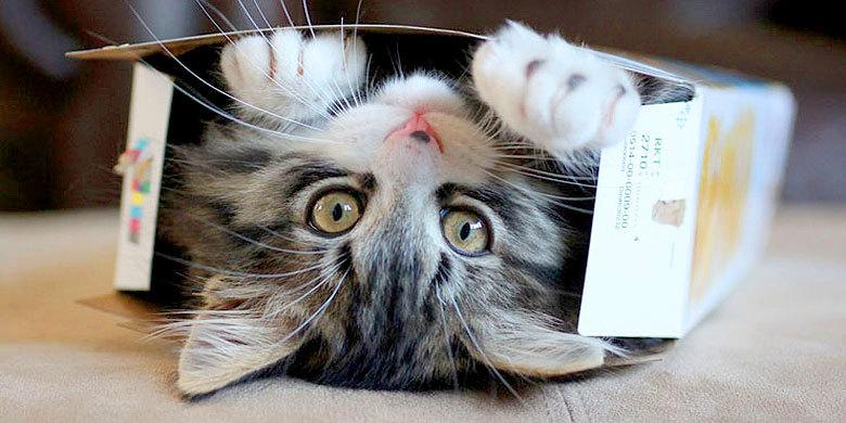 20 Of The Cutest Cats You Will Ever See http://t.co/cC37Nj66OF http://t.co/ISGN9FA6nk