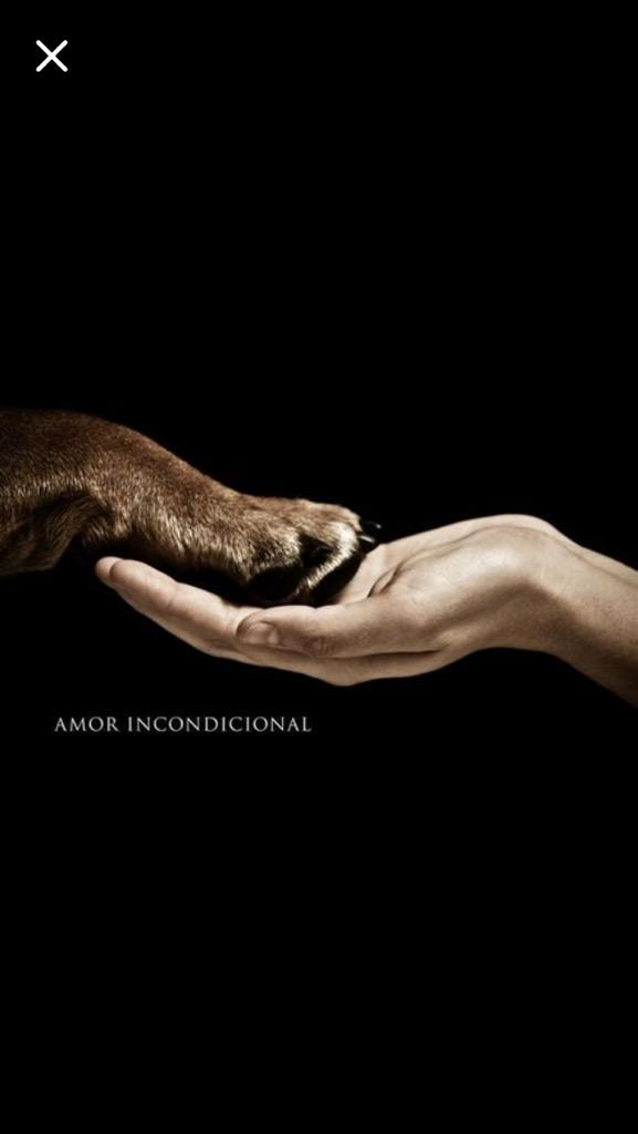 Difundan el amor y el respeto por los animales. Hace un lugarcito en tu vida. #NoCompresAdopta http://t.co/MUkSZuzgMe