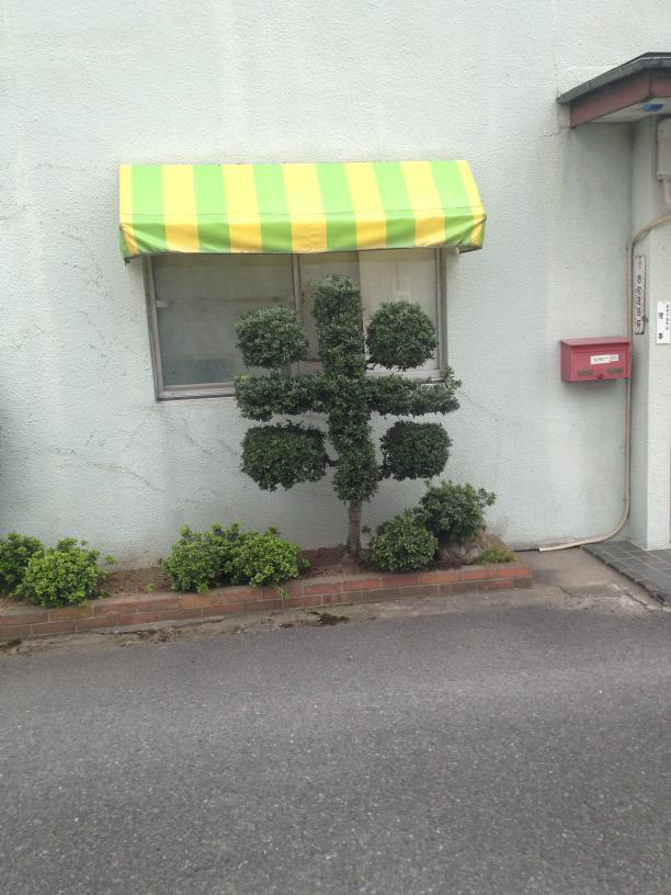 米屋さんの植木。 pic.twitter.com/4gh0yiCfk2