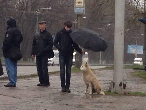 В Украине создали интерактивный ресурс психологической помощи воинам АТО - Цензор.НЕТ 6600