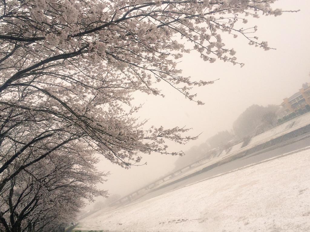 桜と雪…君にも見せたい pic.twitter.com/ITTiepLjRH