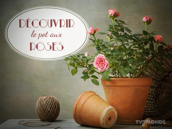 TV5MONDE Japon on Twitter \u0026quot;[フランス語表現] \u0026quot;Découvrir le pot aux roses\u0026quot; 直訳:バラの鍋を見つける。 意味:事件の鍵を発見する、秘密を嗅ぎつける。