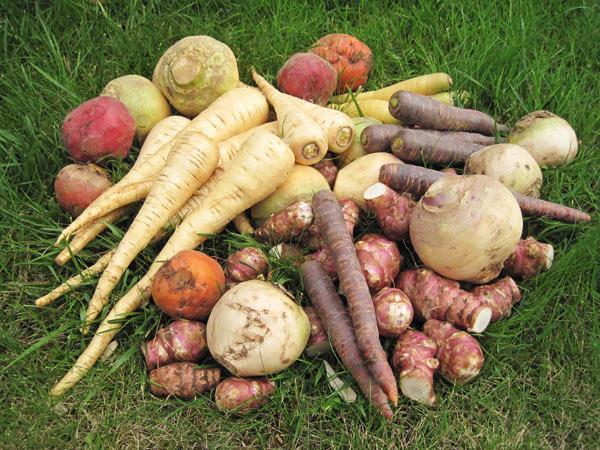 Mais d'où viennent vraiment les légumes anciens ? CCDg_6PWIAAJm46