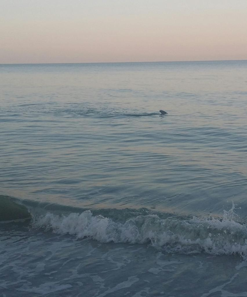 Dolphins at dawn every day... See how close they get to shore xx http://t.co/ubtRYMRcRe