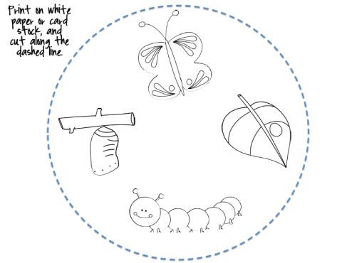 Edworld Exchange On Twitter Quot Stem Butterfly Life Cycle