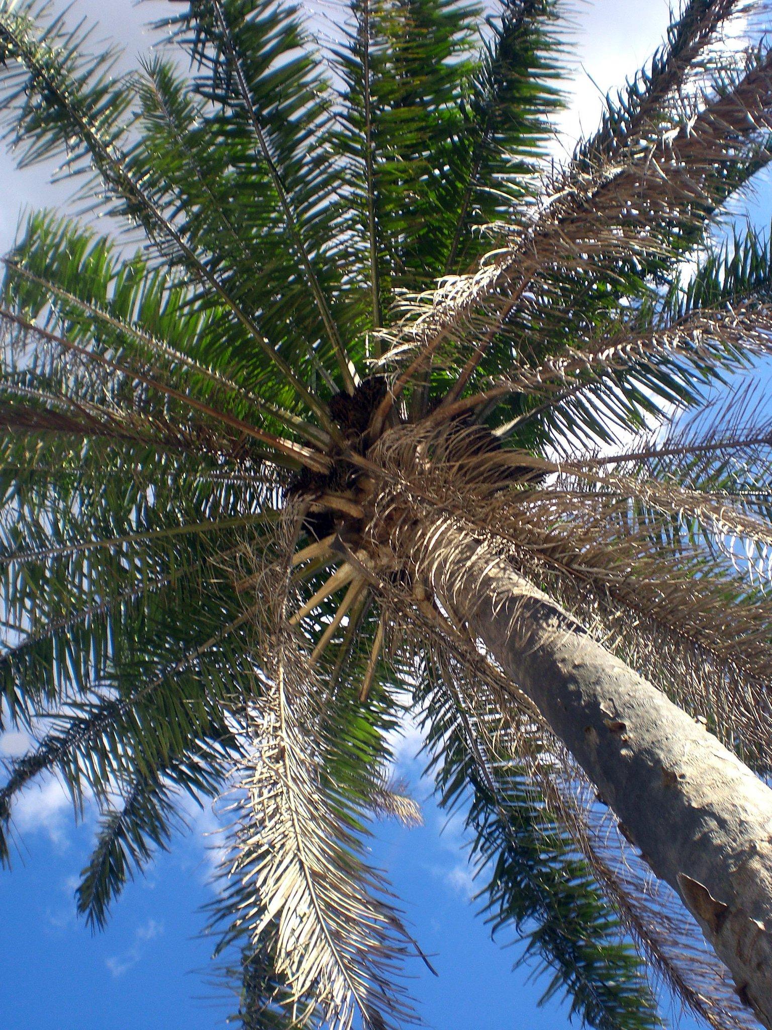 Jard n bot nico med on twitter consideradas las reinas - Jardin botanico las palmas ...