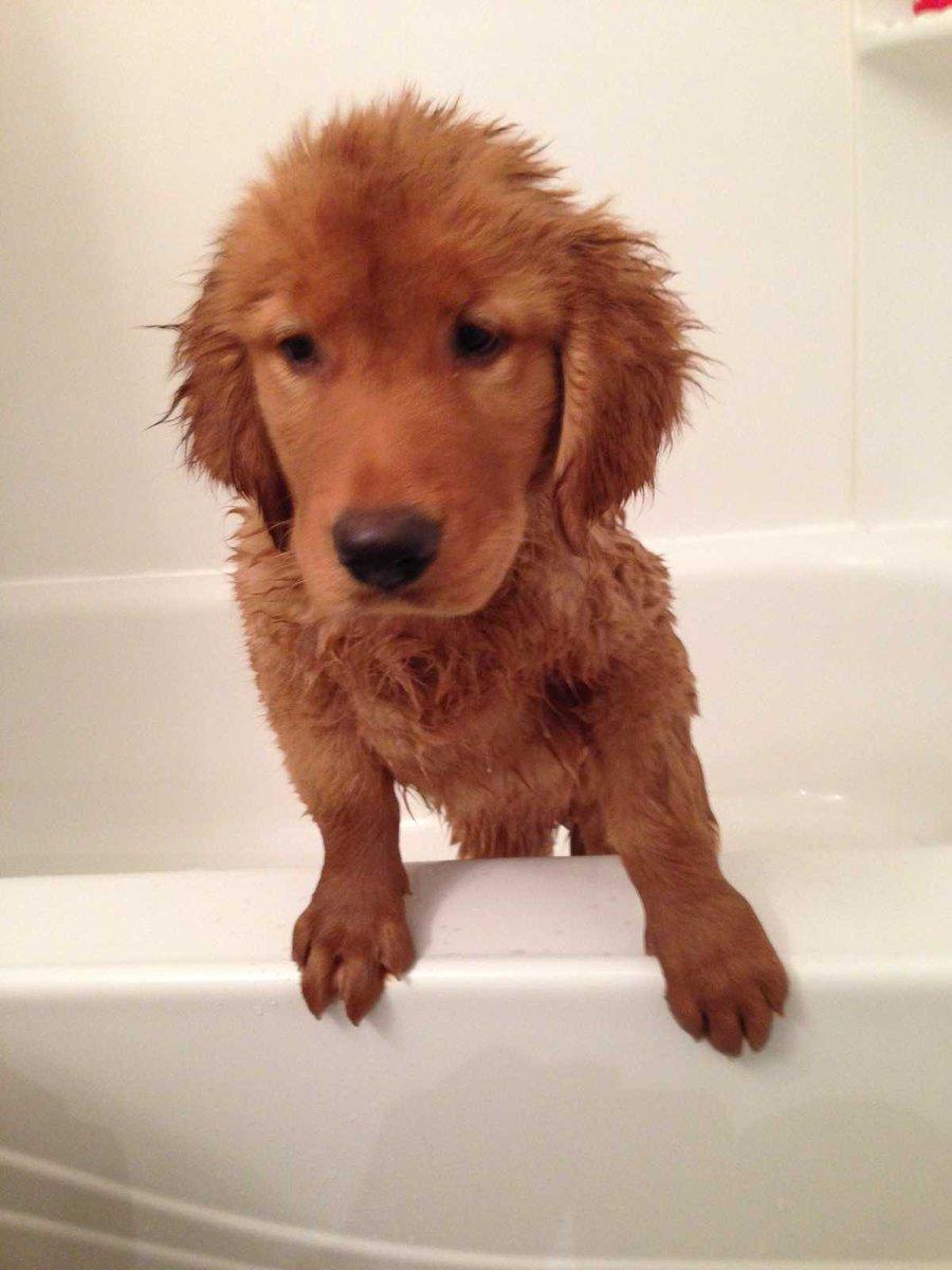 """Marise Varanda on Twitter: """"Loves mud. Hates baths ..."""