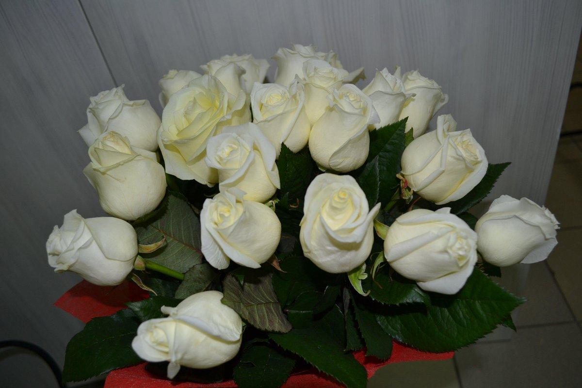 Открытки белые розы для любимой девушки, картинки свинок
