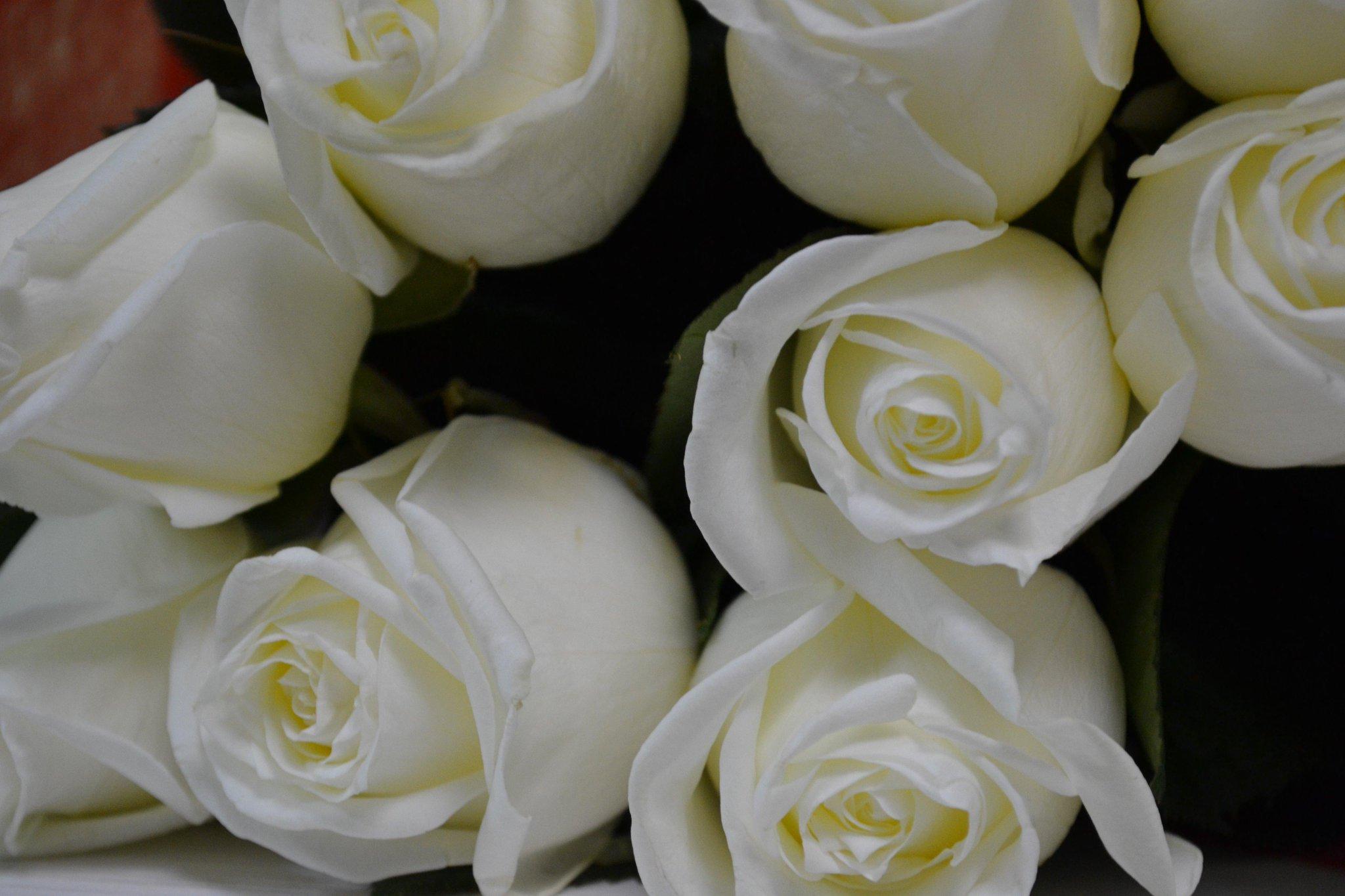 правила букеты белых роз для любимой фото растут