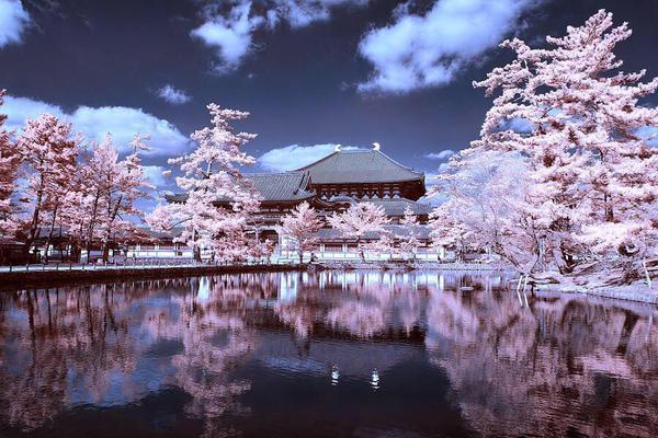 Viaggio in Giappone.