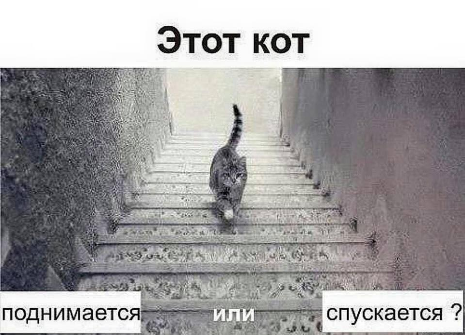 Картинка кот идет вверх или вниз