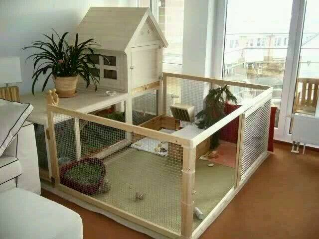 Lapin 39 uance on twitter ideas to prepare the arrival of for Cage lapin exterieur