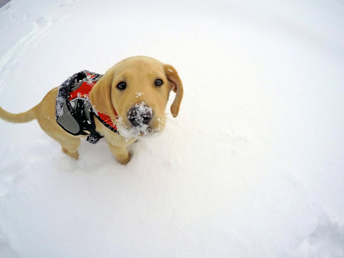 Meet Jake. He's in training to be the next Vail Patrol Dog. His first lesson: playing in fresh snow. #GoPro http://t.co/jV1bVAXxvC