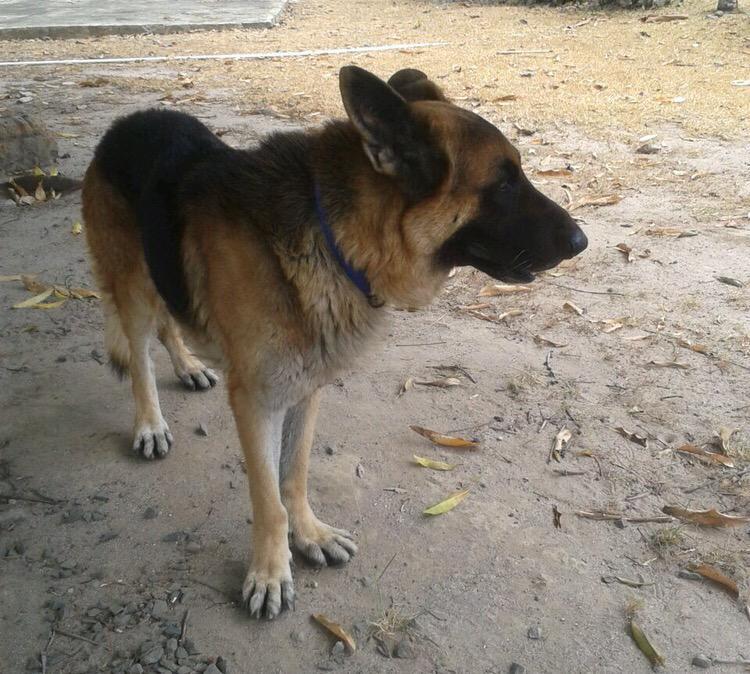 Canallas, le quitaron la vida a mi perro, en nombre de él voy a seguir denunciando las porquerías que hicieron. http://t.co/3sR0D47qrj