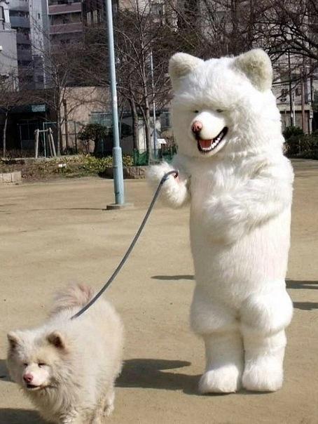 犬のきぐるみを着て犬を散歩すると犬の方が飼い主ぽい事が判明 http://t.co/3oAdC6Lh4t http://t.co/IvT6YbsZOp