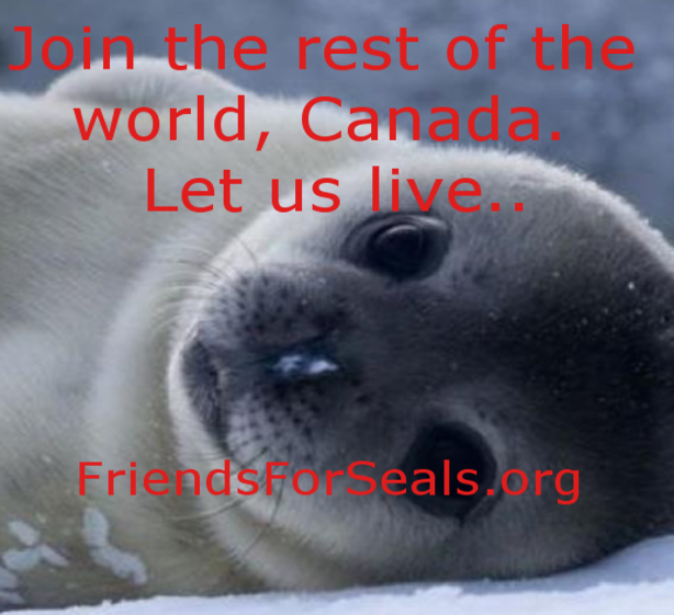 #FlashbackFriday Canada needlessly killed seals.Never mind.They still do!Fishermens #sealhunt. http://t.co/QyHKykk82n http://t.co/XY5nYScP60