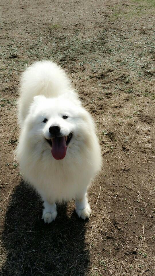"""샤빠...저는요?^^""""@1215thexiahtic: 드림걸즈 보러간날 레인보우 멤버 재경이의 강아지 샵에서 매번 볼때마다 너무이뻐서 지나칠수 없는 강아지 저렇게 큰게 너무너무 순해 ㅎㅎ 날 저 큰 눈으로 http://t.co/PoHIoGqPA9"""