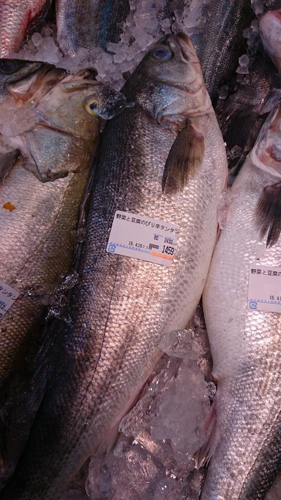 俺には魚にしか見えないが・・ http://t.co/lRVmAsfJse