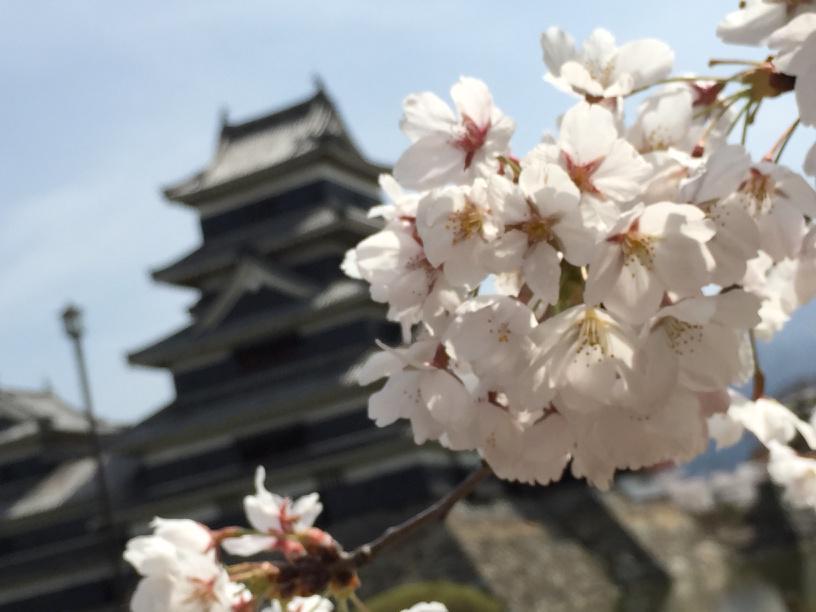 サクラと松本城(^-^) http://t.co/mpX8UQgQZE