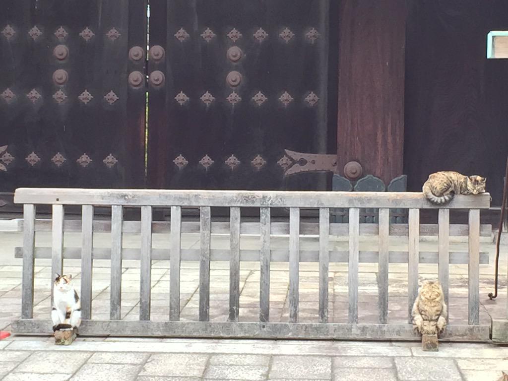 東本願寺の狛猫w  ほんま、狛犬みたいに座ってるし #ネコ pic.twitter.com/G1Dpf0RImZ