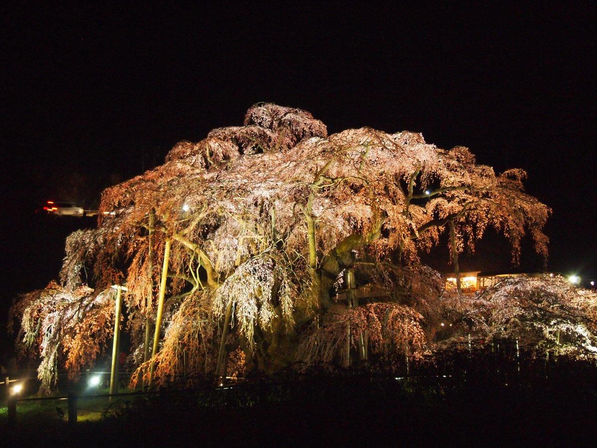 滝桜、もう吸い込まれそうになっていた http://t.co/ByhwE0YK9o