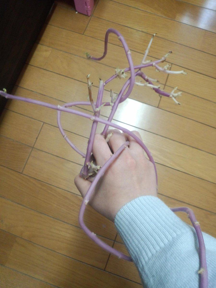 ダンボールに入れたまま忘れてたジャガイモが隠者の紫(ハーミット・パープル)みたいになってたので握ってみた。 http://t.co/TBGo04VSYA