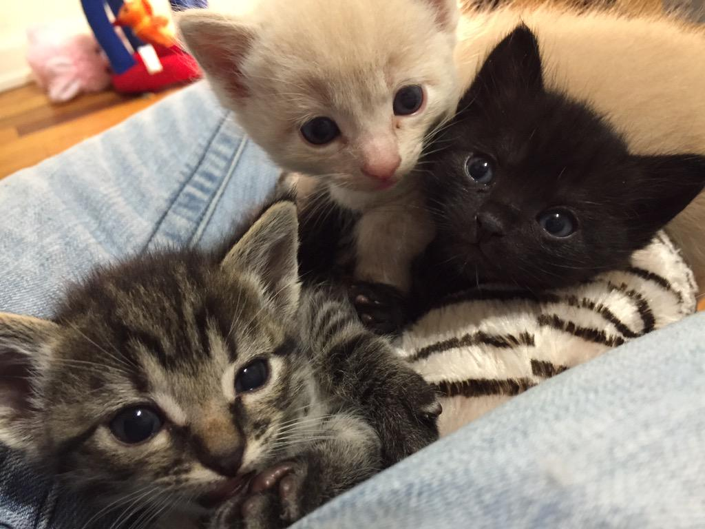 "Kitten Cuddle Room on Twitter ""The Kitten Cam is live and there"