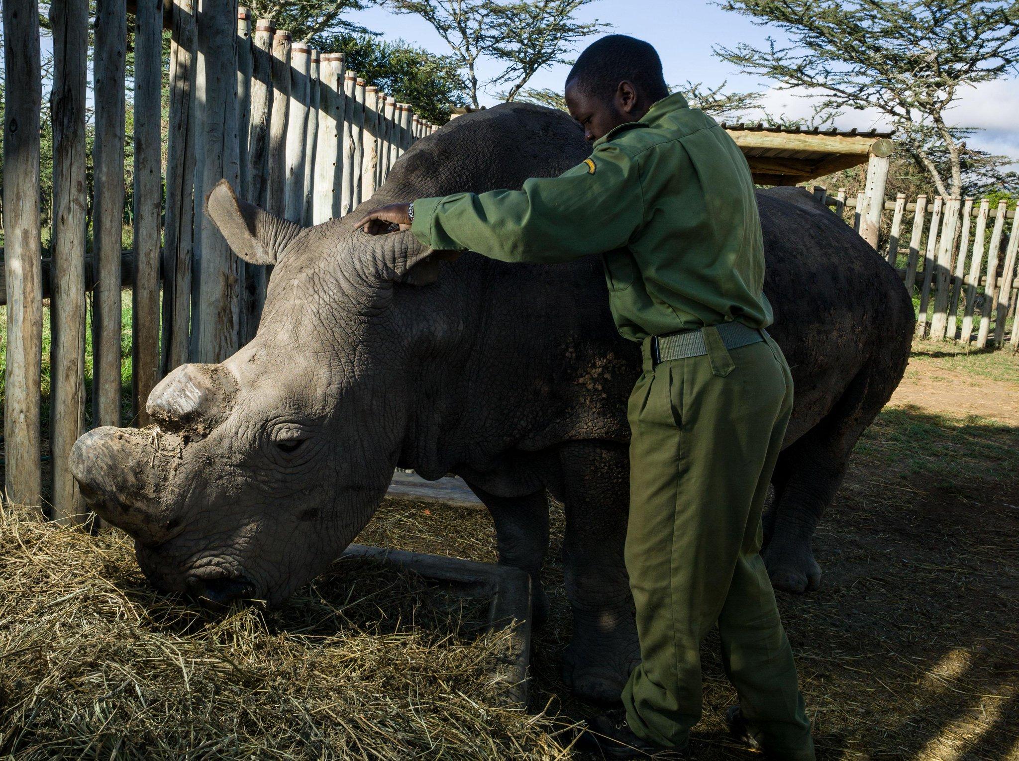 Den sista hanen av vita noshörningar är död