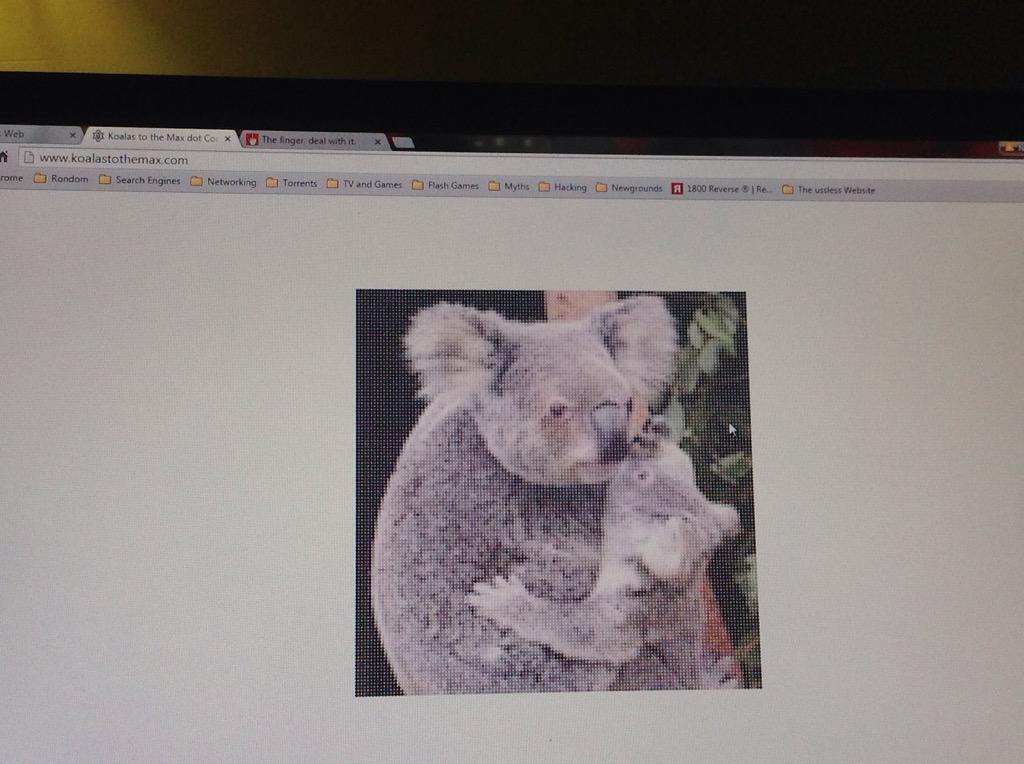 Www theuselessweb com koala