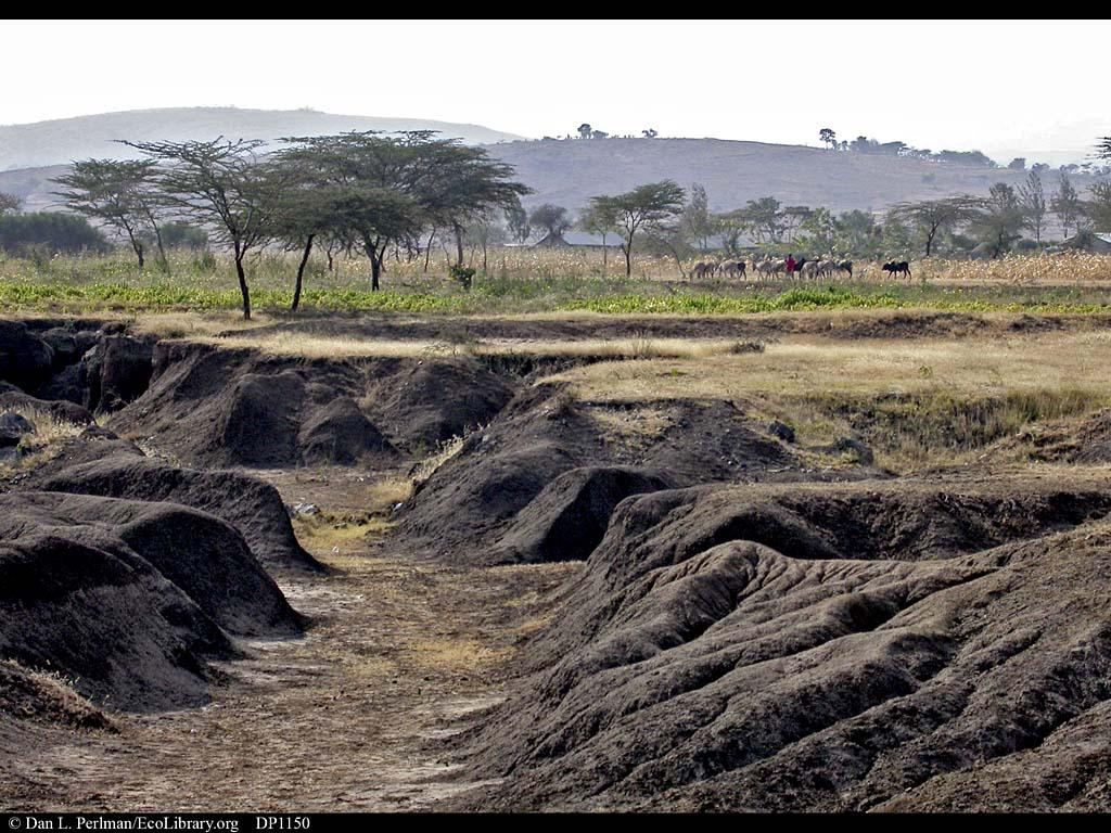 #TalkSoil what do I do if my farm looks like this? The gullies get deeper every time it rains http://t.co/2MD2bi5e4h