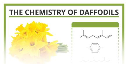 Pretty & poisonous: What molecules give daffodils their properties? http://t.co/oFWjbCK4e1 #spring @compoundchem http://t.co/t6T5U1kRm6