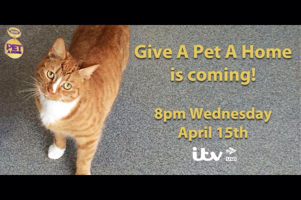Guess what!? #gapah #giveapetahome #itv #animals #animallover #loveanimals #ItsComing http://t.co/XYGqkRYUhZ