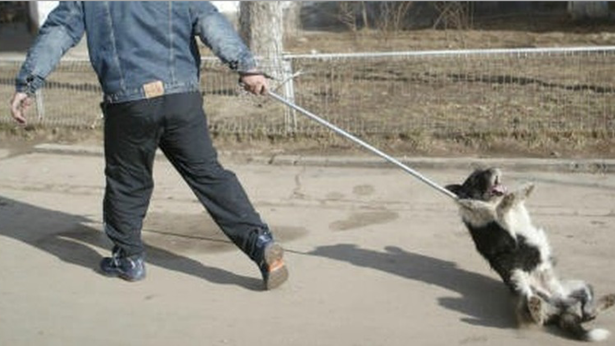The stray dogs in Craiova, Romania need your help! Don't let them down! http://t.co/k4ccenqpVr … http://t.co/Qs6ho36eNw Bastard! Sign & RT!