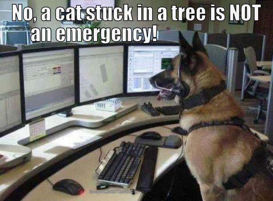 @WMFireDogs see....told ya Kai would be perfect in the control room http://t.co/BlPE08mABn