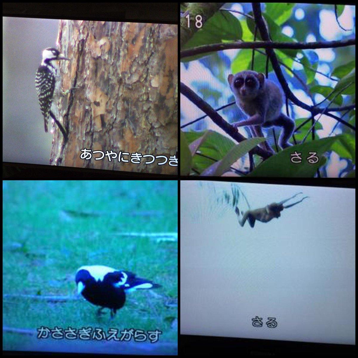 相変わらず鳥には細かいEテレ http://t.co/31RJX1uJJ2