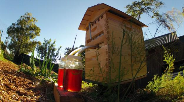 """@disinfo: 3 Reasons To Go Against The #flowhive  - http://t.co/csbZz6Fl1G via @maryamhenein #beekeeping http://t.co/Eg5nPwgYNq"""