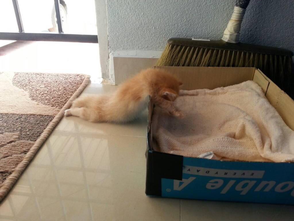 寝床までたどり着け無かった仔猫w pic.twitter.com/0UVFOx8APQ