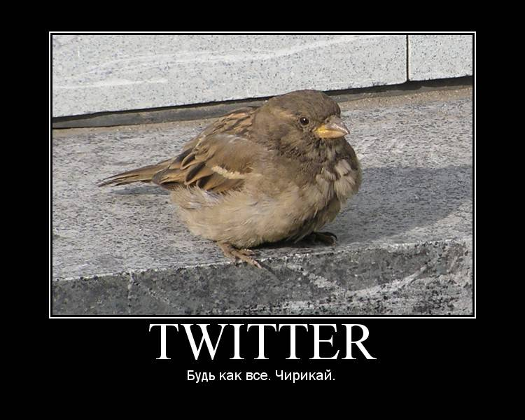 Твиттер смешные картинки